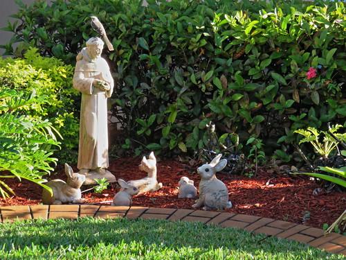 Mockingbird on St Francis head 20150117