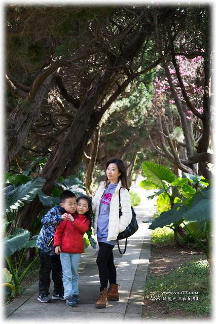0202陽明山花卉020