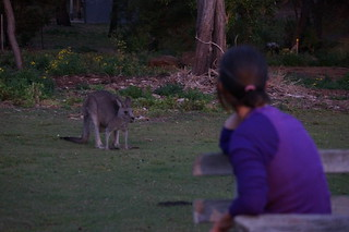 The 'roos are pretty active at dusk