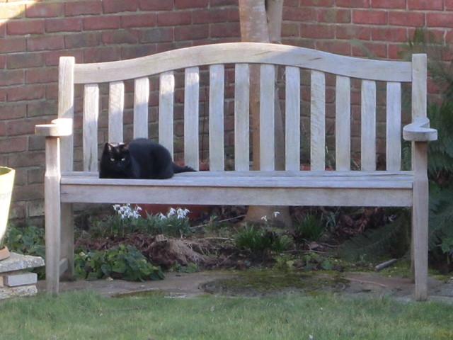 bench Flo
