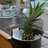 Pineapple in the kitchen