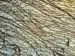 Climb #vines #nyc #highline