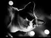 Cat 121: Knight at the Night