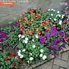 A year ago today from #Timehop.   #Nelsonville #Ohio #AthensCountyOhio #ohiogram #ohioigers #ohioexplored #myohioadventure #letsroamohio #flowers