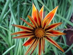 ΛΟΥΛΟΥΔΙΑ / FLOWERS
