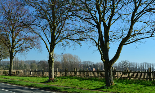 20140309-05_Road-side trees + Fence_Cawston B4642 Coventry Road (old A4071)