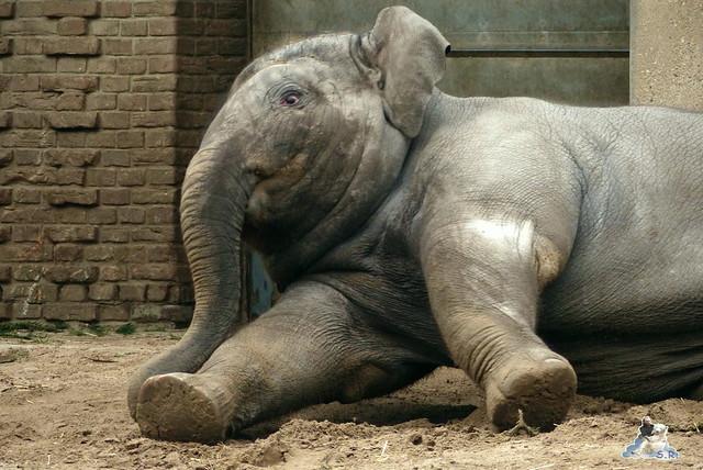 Berliner Zoo 25.01.2015  126