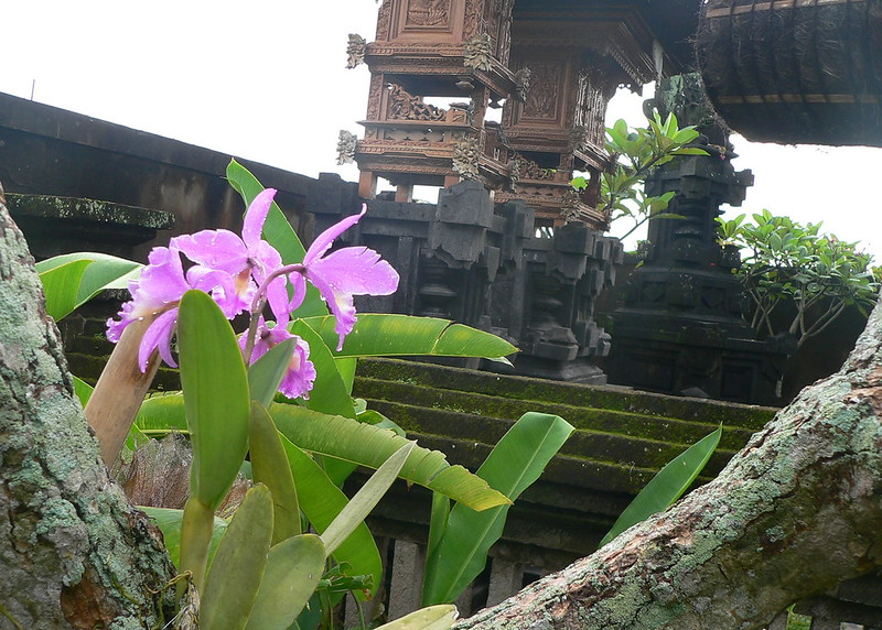 Dendrobium sp. et autres orchidées [id. non terminée] 15769285854_d18eedc92a_c
