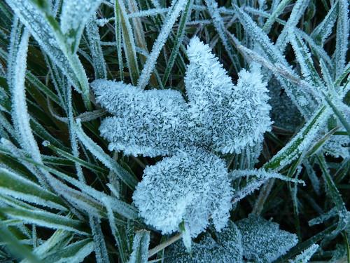 Frost 2 (Berwick to Birling Gap)