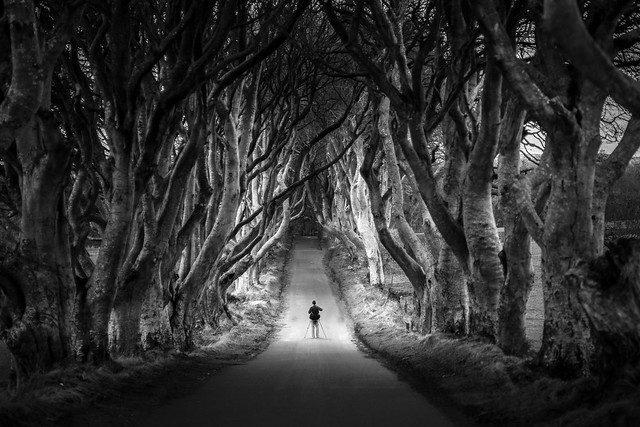 The photographer at the Dark Hedges, Northern Ireland