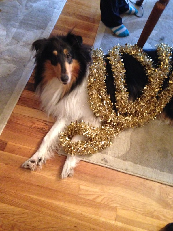Christmas Collie