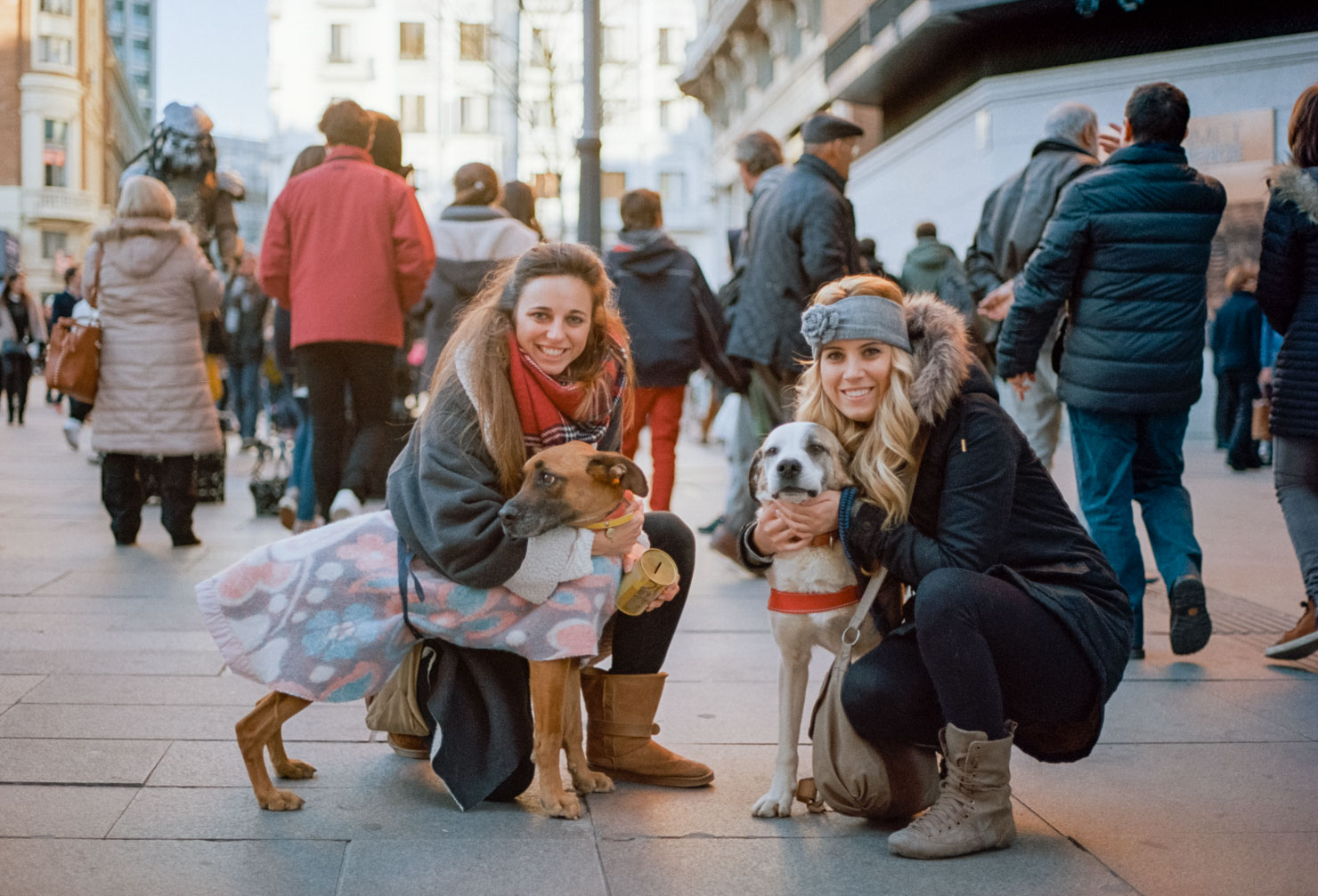 Adopt a Dog | Callao Square, Madrid