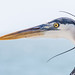 Heron in the Wind #2 by William Doran