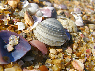 Sea-shells on the sea-shore - By Dimuth Weerasekera