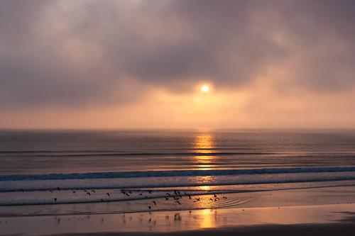 usa beach sunrise soft florida seabirds softlight flaglerbeach clolour morningsoftness
