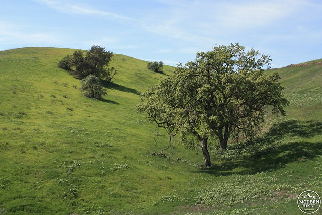 las virgenes canyon 60