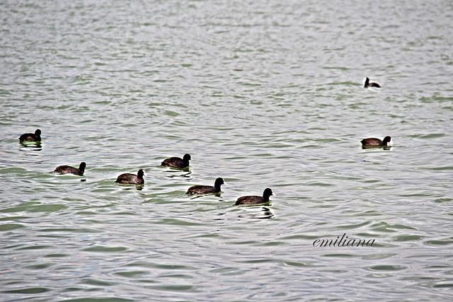 folaghe a Castiglione del Lago