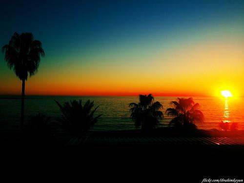 blue sunset sea sky sun tree beach turkey türkiye samsung palm antalya galaxy palmiye alanya s4 günbatımı sahil güneş ağaç turkei gün batımı avsallar alaiye