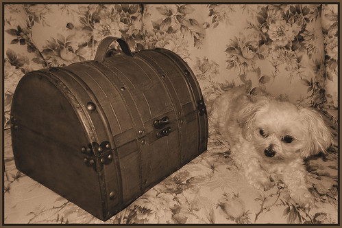 Bella Wonders What Treasures Are In This Old Trunk