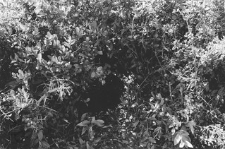 Viet Cong Tunnel, Operation Double Eagle, 1966