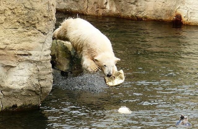 Zoo am Meer 07.03.2015   146