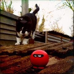 Cat. Burglar.
