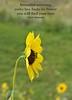 Bee and Flower Haiku