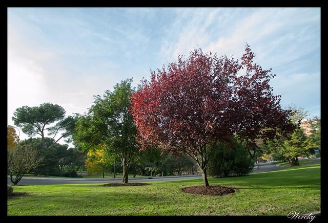 Los colores de la Dehesa de la Villa en otoño