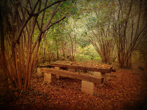 wood italy fall nature leaves bench italia friuli auumn villalta