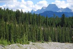 Kananaskis Country - Bow Valley Wildland Provincial Park, Cougar Creek