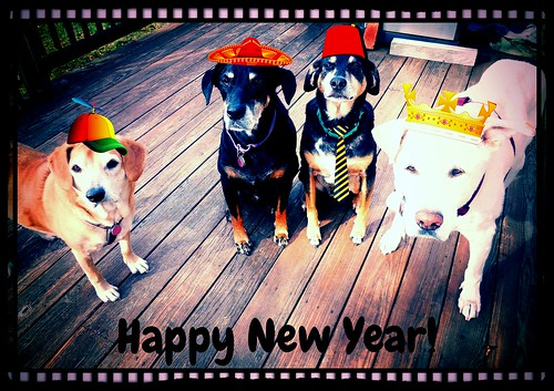 4dogs_111614h