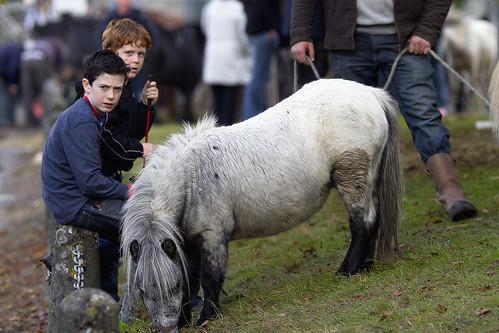 Junior horse dealers