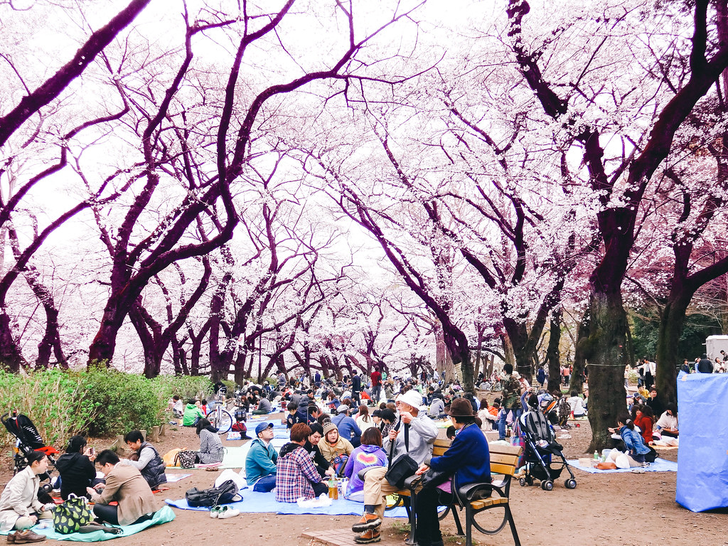 Hanami at Inokashira Park 2013