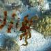 Cuttlefish by scuba_t