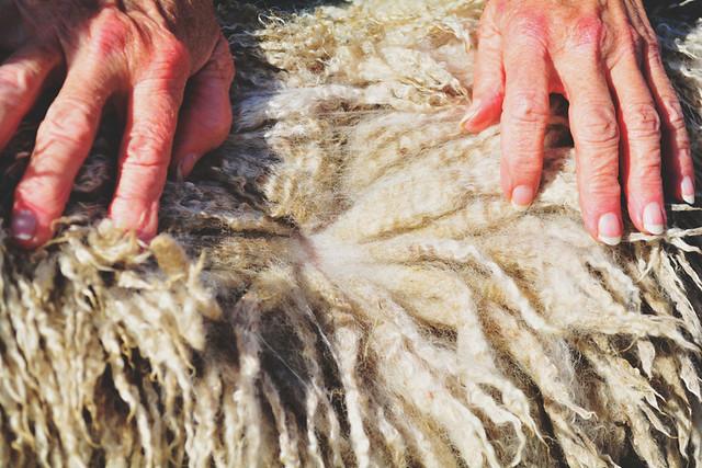 wool26