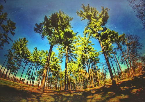 app beautiful blue 2014 camping mextures beauty campout hdr green iphoneedit jamiesmed snapseed handyphoto rokinon fisheye shadows shadow lens sky wintonwoods trees tree skies prime geotagged geotag creepycampout manual facebook wide angle landscape hamiltoncounty cincinnati fixed focus ohio midwest october autumn fall canon eos dslr 500d t1i rebel photography