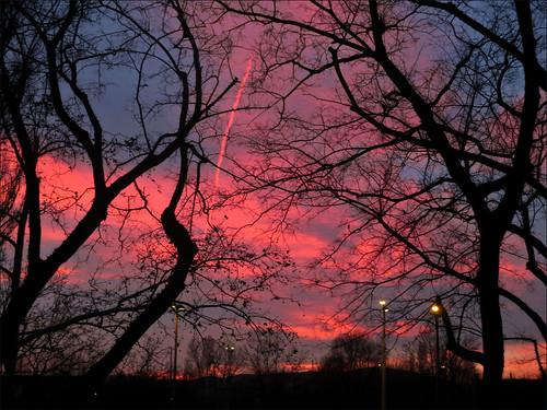 sunset tree hungary budapest