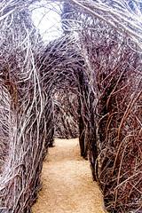 NC Botanical Gardens in February