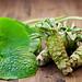 wasabi pentru promovarea energiei curate