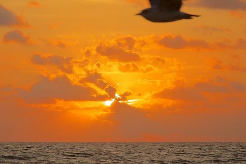 ocean beach birds sunrise dawn surf florida indialantic
