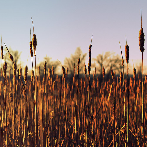 park nature landscape pennsylvania harrisburg harrisburgpa naturetrail wildwoodpark