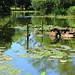 Jardin botánico en Durban by cazador2013