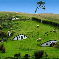 #VillagesSeria #KoylerSeria  #HobbitonVillageSeria  #SheepsLifeSeria #SheepsSeria #SheepsAreGrazingSeria #KoyunlarSeria #HobbitonSeria #HobbitonMovieSeria #HobbitonMovieSetSeria #MatamataSeria  #NewZealandSeria #NewZealandHousesSeria #NewZealandVilagesSer