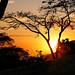 O sol nascendo por trás das árvores da floresta tropical... Rio de janeiro, Brasil. by Leonardo Martins