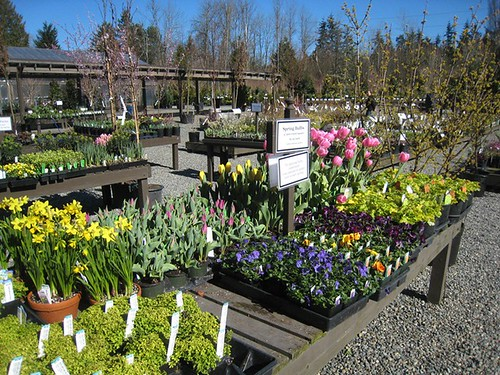 Spring bulbs for planting