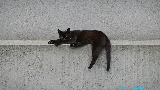 Kitty moment