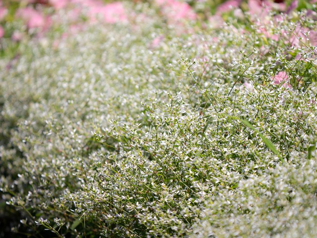 花畑を圧縮効果で撮影
