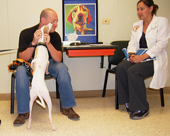 Memphis, an Italian greyhound, was injured during catastrophic tornados in 2013 in Oklahoma. The dog was treated at the Oklahoma State University Veterinary Medical Hospital. Memphis was included in published research about treating dogs with traumatic storm-related lung injuries. Pictured is Memphis' owner, Scott Ashpaugh, and Dr. Danielle Dugat, OSU assistant professor of small animal surgery.