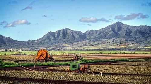 hawaii pineapple pineapplefields usradpicturespearlcityhawaiiunitedstates