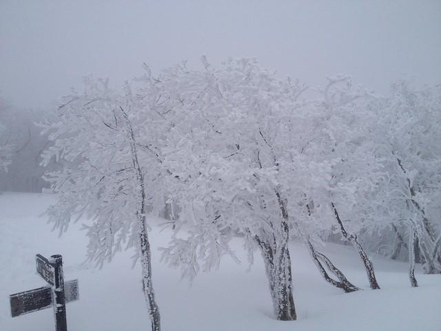 綿向山 山頂 樹氷